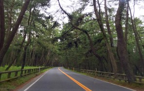 The road amongst the forest by Karatsu Castle, Kyushu Island, Japan.