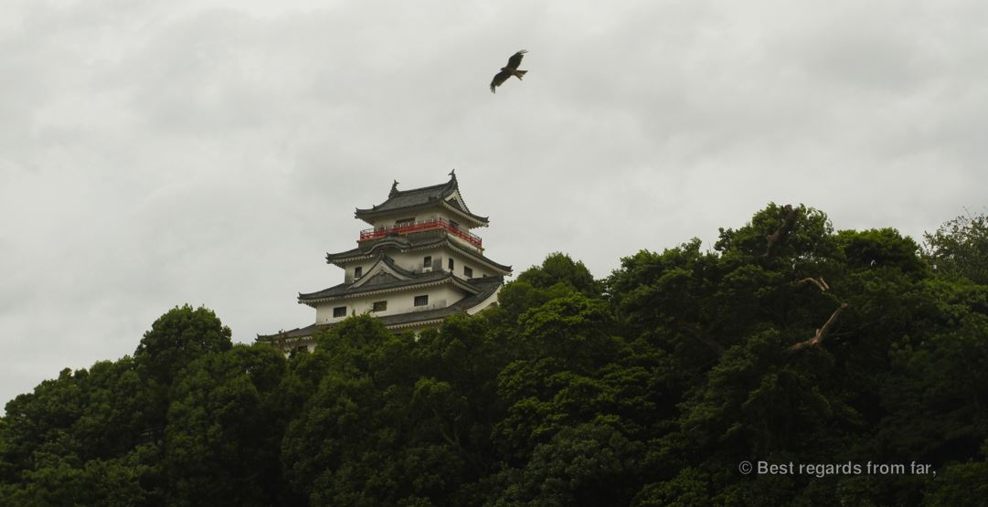 Eagle circling around Karatsu castle, Kyushu Island, Japan.