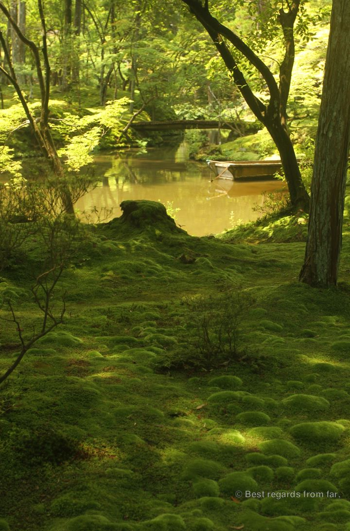 The central pond at Koke-dera, the temple of moss, Kyoto. A row boat in a harmony of green.