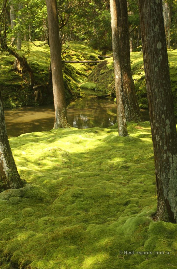 Moss, cedars, stream and wooden bridges in Koke-dera, the temple of moss, Kyoto.