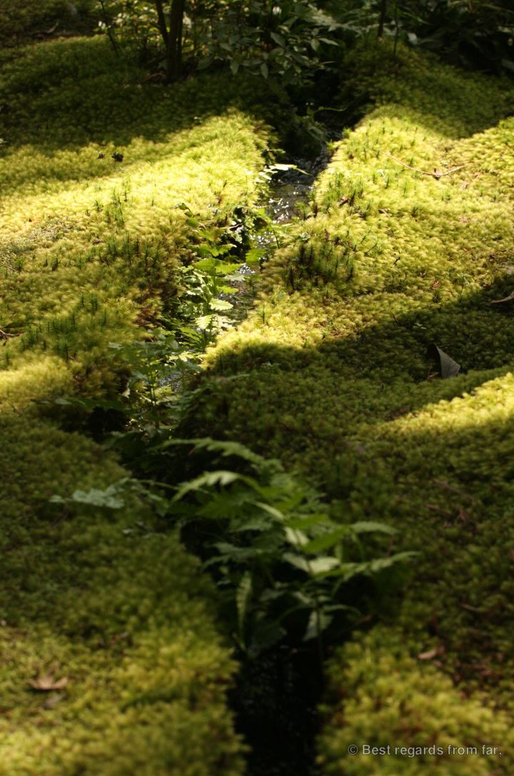 Narrow irrigation channel in Koke-dera, the temple of moss, Kyoto.