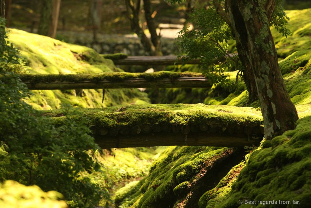 Wooden bridges over a small creek in the Koke-dera moss garden, Kyoto.