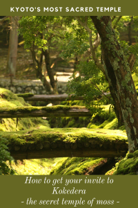Three wooden bridges covered in moss in an oasis of greenery at the temple of Kokedera, Kyoto, Japan.