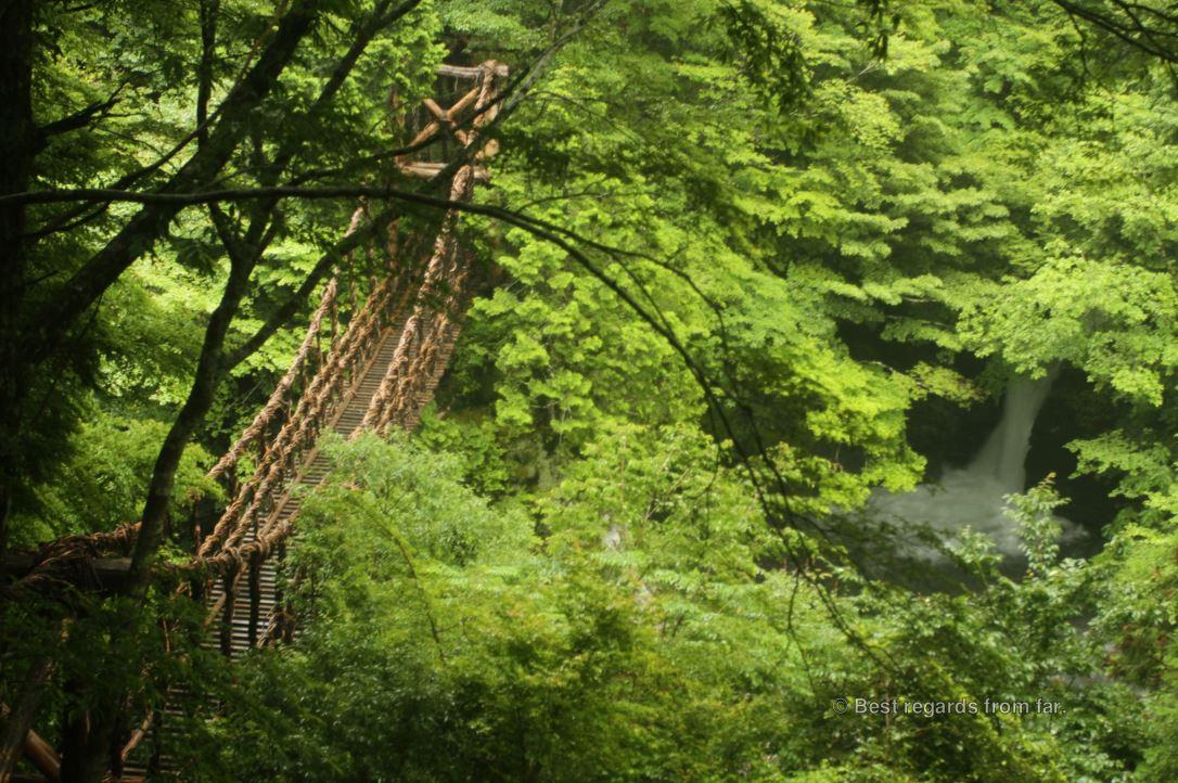 Vine bridge in a lush forest by a waterfall on Shikoku Island, Japan.