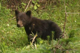 Cub, so cute!