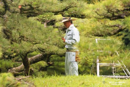 Gardener working carefully in Ritsurin Gardens in Takamatsu, the most beautiful Japanese gardens in Japan.