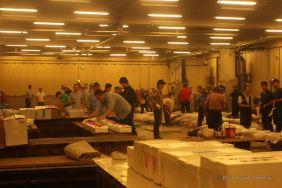 Inspecting the tunas