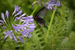 Butterfly in Glover garden, Nagasaki