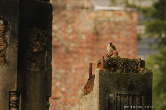 A sparrow rests on the ruins of the Hiroshima Prefectural Industrial Promotion Hall, Hiroshima