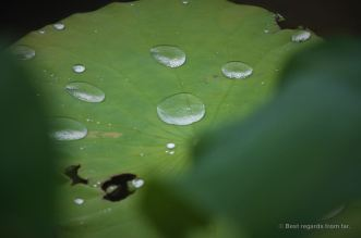 Raindrops on the leafs