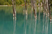 The Blue Pond, Hokkaido, Japan.