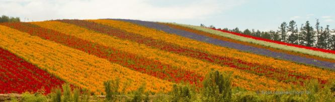 Flower fields along patchwork road, Biei