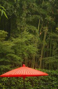 Characteristic bamboo forest at Ginkaku-ji