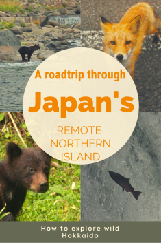 A roadtrip through Japan's rempote northern island written on a photo of two bears a fox and a salmon.
