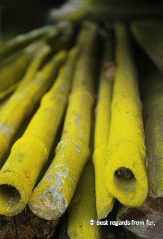 Close-up of green bamboos.