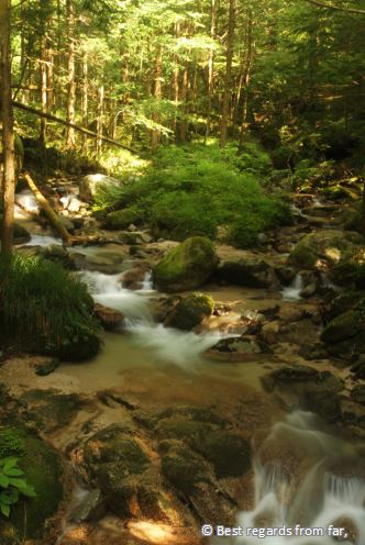 Smooth stream of water running down through a green forest.
