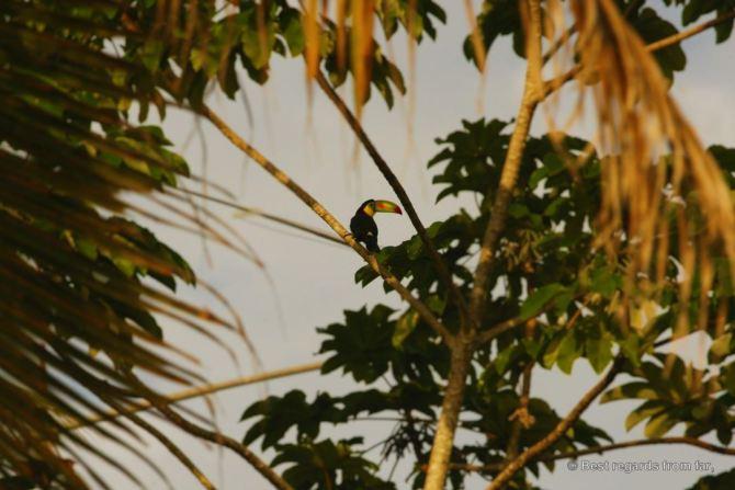 Belize-Tucan