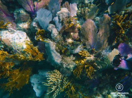 Underwater photo of a coral garden while snorkeling in Glover's Reef, Belize