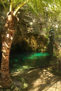 Grand cenote is one of the most beautiful cenotes in the tropical forest