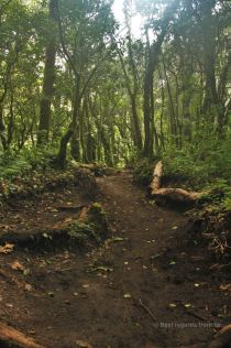 One of the four ecosystems on our way up the Acatenango volcano: the could forest