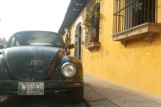 A beetle on the cobblestone street in Antigua, Guatemala