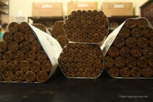 Quality-approved cigars in the climate-control storage room, Drew Estate, Esteli, Nicaragua