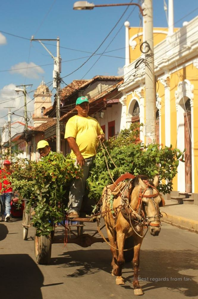 Horse and cart in Granada, Nicaragua