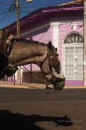 Local transport in the streets of Granada, Nicaragua