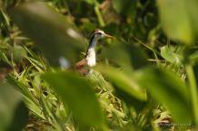 Birdwatching in the islets of Granada, Nicaragua