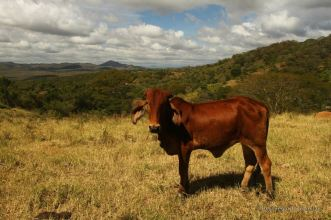 Beautiful landscapes of Miraflor, Nicaragua