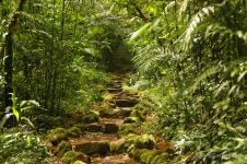 The paved crater trail through the stunning cloud forest on the Mombacho volcano, Nicaragua