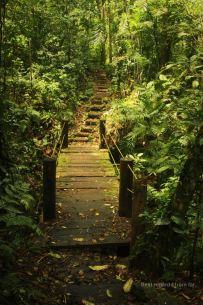 The paved el Puma trail on Mombacho, Nicaragua