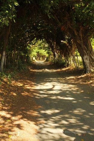The trail to Punta Jesus Maria, Ometepe island, Nicaragua