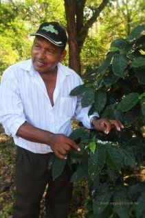Inspecting the coffee plants, Finca Magdalena, Ometepe island, Nicaragua