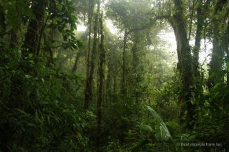 The mystical Santa Elena Cloud Forest, Costa Rica
