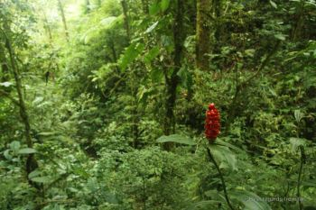 The stunning flora of Santa Elena Cloud Forest, Costa Rica