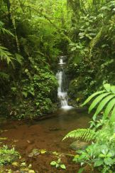The fresh waters of the Santa Elena Cloud Forest, Costa Rica
