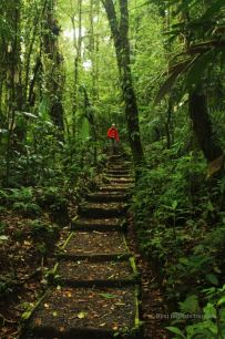Hiking the tranquil trails of the Santa Elena Cloud Forest, Costa Rica