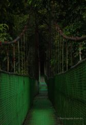The suspension bridge of Reserva Biologica la Tirimbina, Costa Rica