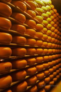 Ripening the Dutch cheese, The Netherlands