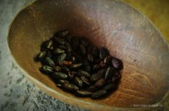 100% pure cacao! Bocas del Toro, Panama