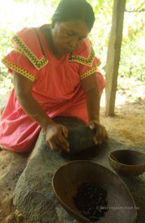 Making the organic cacao, Bocas del Toro, Panama