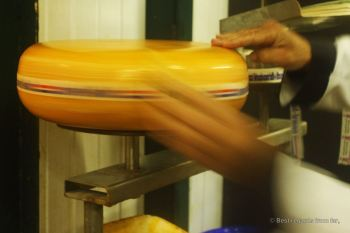 Labelling a Dutch cheese wheel, The Netherlands
