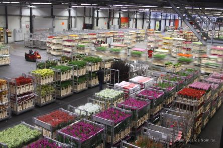 The well-choregraphed ballet at the flower auction in Aalsmeer, The Netherlands
