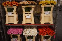 Every bunch is barcoded to allow for a second to none logistic at the flower auction in Aalsmeer, The Netherlands