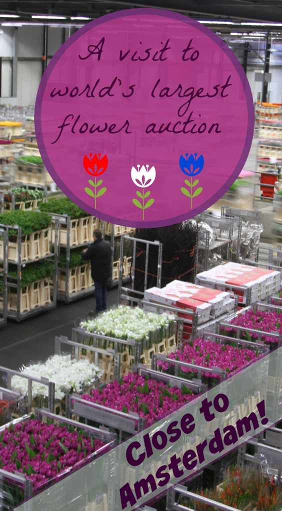 Flower auction - the Netherlands - Pinterest - Pin