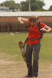 Marcella versus monkey in Lopburi, Thailand