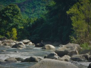 A mahout crossing the Mae River in search for food in the jungle, Chiang Mai, Thailand