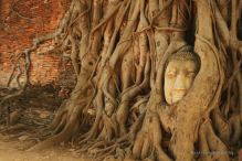 Ayutthaya's most photogenic Buddha, Thailand