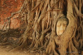 Ayutthaya's most photogenic Buddha, Thailand